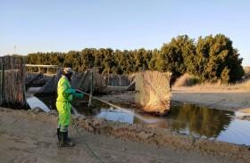 تدوير تنتهي من التعامل مع آثار الحالة الجوية الأخيرة التي شهدتها إمارة أبوظبي
