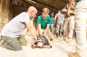 انضمام التماسيح إلى حديقة الإمارات للحيوانات