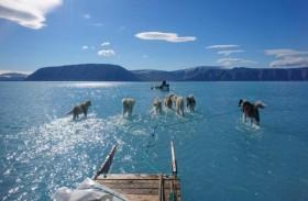 كلاب تمشي على الماء