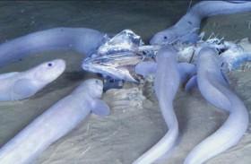 اكتشاف أنواع جديدة من الأسماك