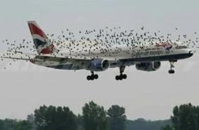 هل تسقط الطيور الطائرات؟