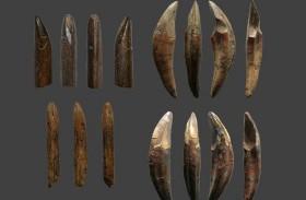 عظام قرد قديم تعيد كتابة تاريخ الإنسان