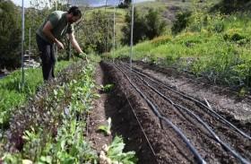كورونا يشكل تهديدا للعمال الزراعيين في الولايات المتحدة