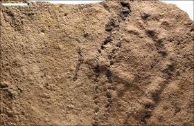 آثار حيوانات تعود الى 541 مليون سنة