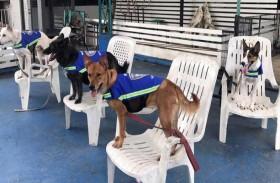 الكلاب الضالة لتأمين شوارع