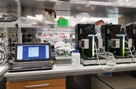 باحثون من جامعة نيويورك أبوظبي يكتشفون نوعاً فريداً من الطحالب الخضراء الإماراتية