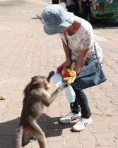امرأة تطعم قردًا أمام معبد برانغ سام يود خلال مهرجان «بوفيه القرود» السنوي في مقاطعة لوبوري، شمال بانكوك «ا ف ب»