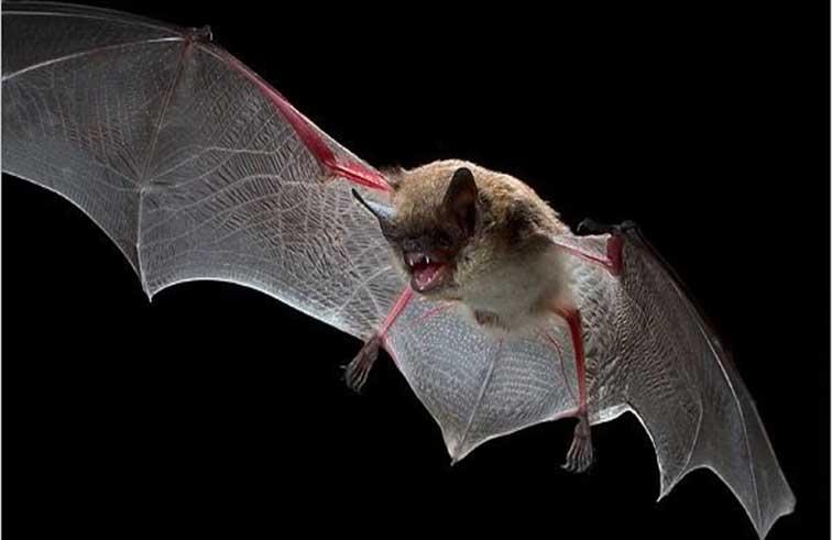 ألوان فراء خفافيش عمرها 49 مليون عام