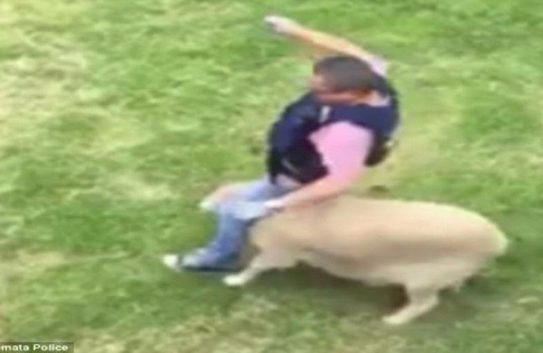 خروف مطلوب للعدالة هاجم شرطياً
