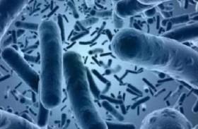 البكتريا الزومبي.. 25 مليار طن تحت أقدامنا