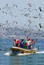 مجموعة من الصيادين على متن قاربهم يحتفلون بأعياد الميلاد بملابس سانتا كلوز بينما تحلق حولهم الطيور في فالبارايسو، تشيلي.    (رويترز)