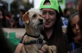 ضريبة على اقتناء الكلاب