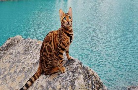 القطة الأكثر حظا في العالم