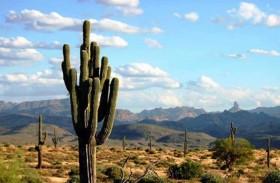 الصبار المكسيكي.. سلاح مستقبلي لمحاربة التلوث