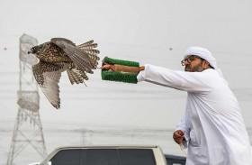 تصفيات الطائرة اللاسلكية تترقب المنافسات الأقوى في بطولة فخر الأجيال للصيد بالصقور