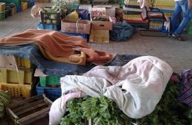المستهلكون : الانتاج الزراعي  وفير والأسعار مناسبة