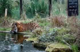 ضربة مؤلمة لأقدم حديقة حيوان بالعالم