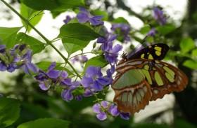 آلاف الفراشات تبهر زائري حديقة حيوان في كاليفورنيا