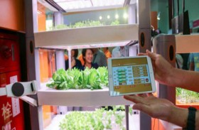 زراعة الخضراوات بالهواتف الذكية