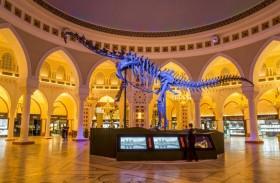 الإمارات للمزادات ينظم مزادا لبيع هيكل الديناصورات العملاق في دبي