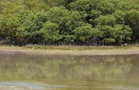 80 في المائة من غابات أشجار القرم في أبوظبي تتمتع بحالة صحية جيدة