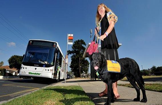 كلبة تركب الحافلة وتتنزه بمفردها