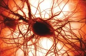 الخلايا الجذعية مصدر جديد للدماء البشريةً