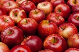 دقيق التفاح .. سر الرشاقة وخفض الكوليسترول