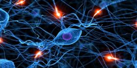 ابتكار خلايا جذعية لكافة جسد الإنسان