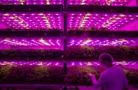 مزرعة «زهرية» تبتكر حلولا للتكيف مع كورونا