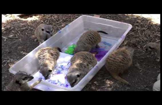 حديقة تكتشف مواهب الحيوانات