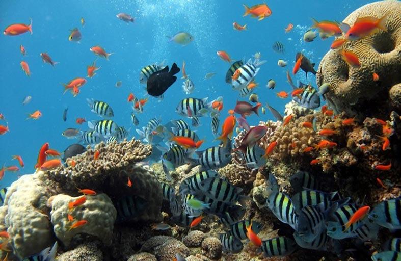 بعض الأسماك تتكيف مع الاحترار العالمي بالتظاهر بأنها في الليل