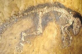 اكتشاف أحافير ديناصورات في الصين