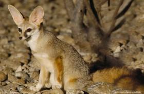 هيئة البيئة تصدر تقرير أبوظبي للقائمة الحمراء لأنواع الحياة الفطرية