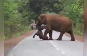 أنثى فيل مكلومة تشيّع صغيرها الميت