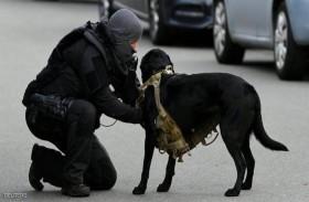 كلب الشرطة الهولندية بسترة واقية