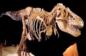 اكتشاف فصيلة تيتانوصورات جديدة