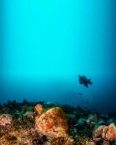 أحد الغواصين يستكشف أنقاض حطام سفينة قديمة في جزيرة ألونيسوس في بحر إيجة باليونان (أ ف ب)