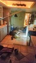 تمساح يستعد لمهاجمة من يقترب منه بعد اقتحامه أحد المنازل في كليرواتر ، فلوريدا ، الولايات المتحدة. «رويترز»