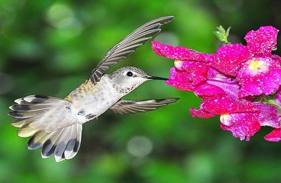 طيور تستبدل غذائها برحيق الزهور
