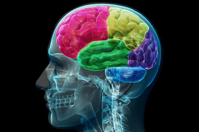 الدماغ يؤثر بحرارة الجسم