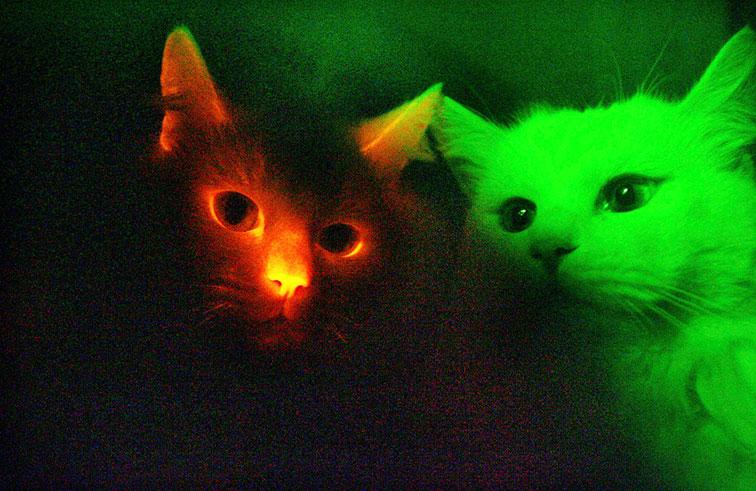 الهررة والكلاب قد ترى بالأشعة فوق البنفسجية