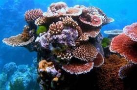 حموضة المحيطات تهدد الشعاب المرجانية