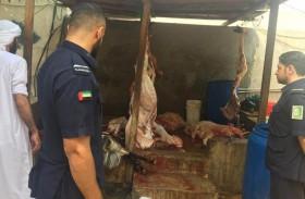 بلدية الشارقة تنجز 3 آلاف  أضحية خلال العيد