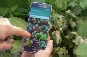 تطبيق إلكتروني لتشخيص أمراض النباتات