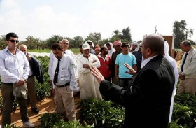 «خدمات المزارعين» يطلق خطة تدريب عمال المزارع 2018 لتشمل 734 ورشة تدريبية حقلية