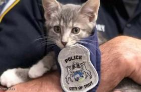 قطة تعين بالشرطة وتؤدي اليمين