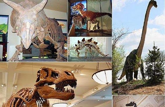 تحديد نسيج متحجر لدماغ ديناصور