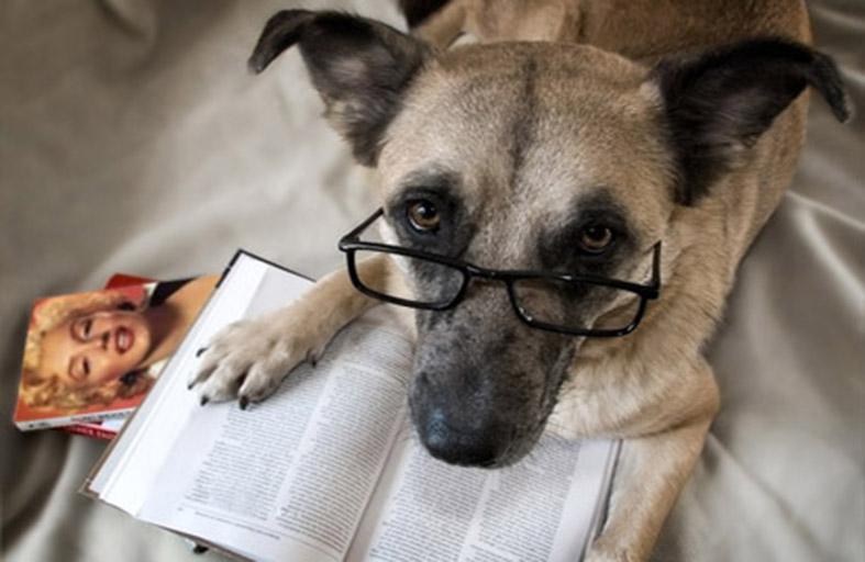 كلب يميّز أكثر من 1000 كلمة