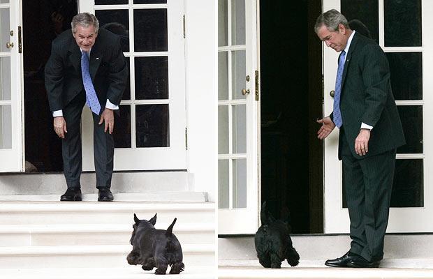 بوش من الرئاسة إلى رسم الكلاب